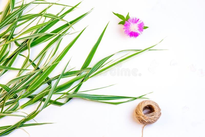 Det dekorativa gräsblommablåklint och repet tvinnar på vit bakgrund med kopieringsutrymme, bästa sikt royaltyfri bild