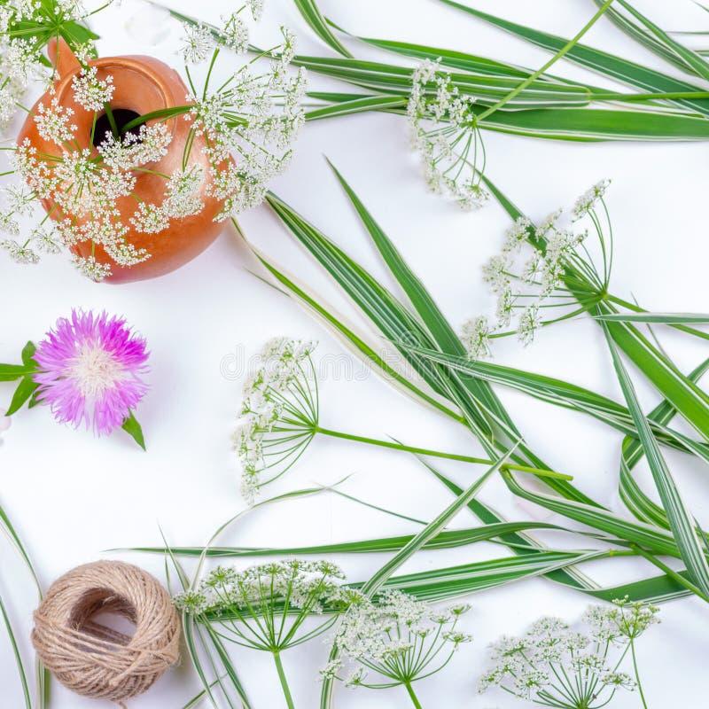 Det dekorativa gräsblommablåklint och repet tvinnar på vit bakgrund royaltyfri foto
