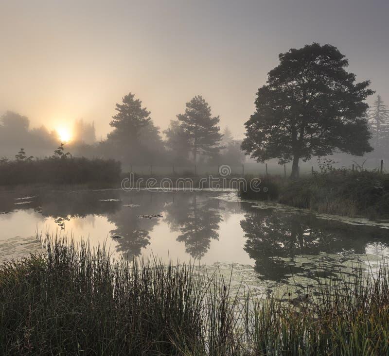 Det dimmiga dammet tidigt på morgonen med konturerna av träd arkivbilder