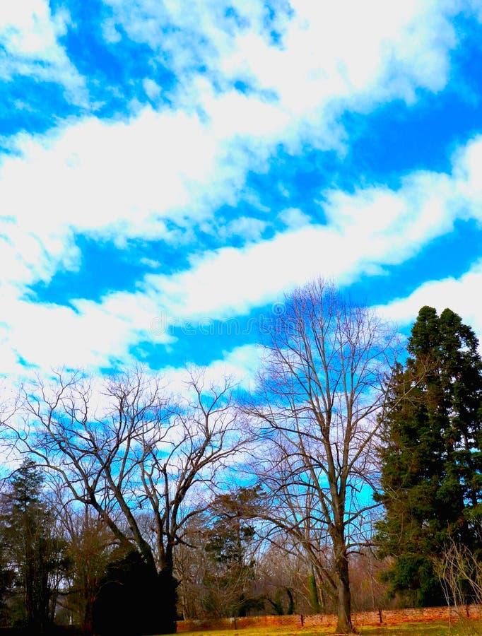 Det dramatiska molnet river av korset den djupblå himlen med kala trädfilialer under royaltyfri fotografi