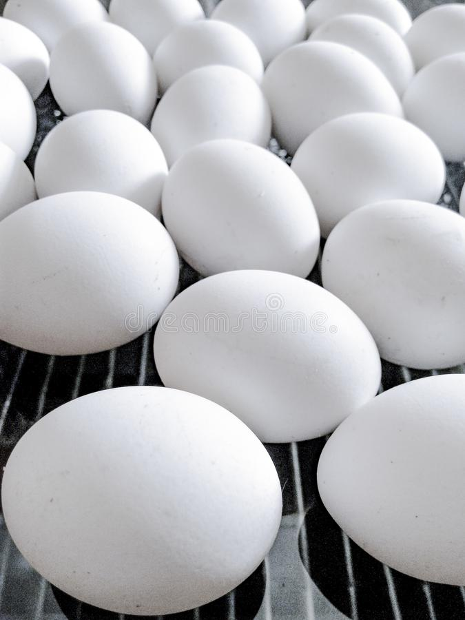 det easter ägget isolerade naturlig white royaltyfri foto