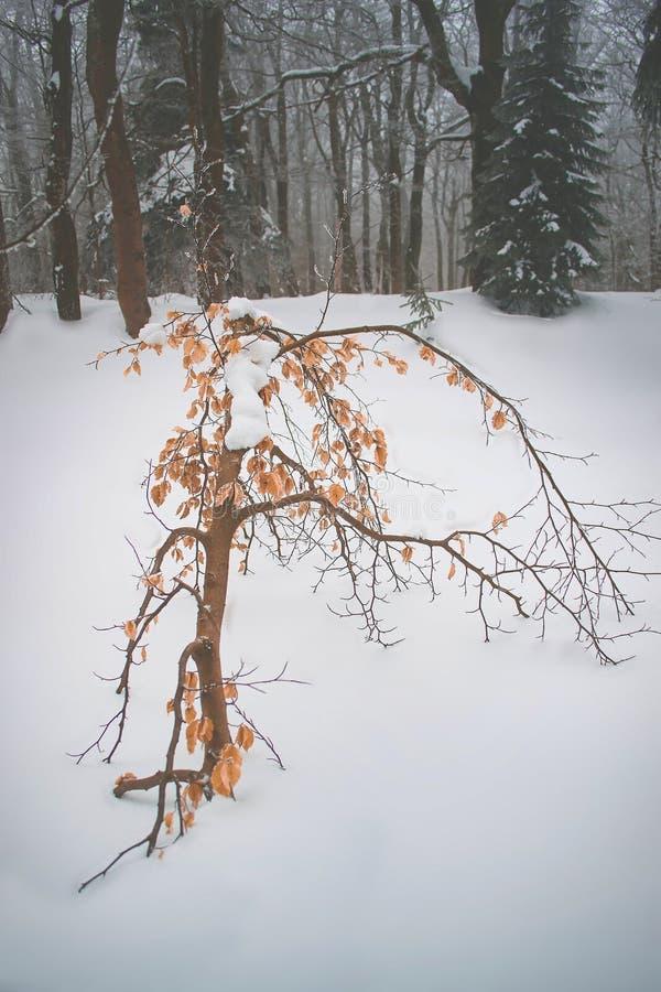 Det enda klädda trädet bland de nakna arkivfoto