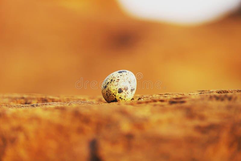 Det ensamma ägget arkivfoton