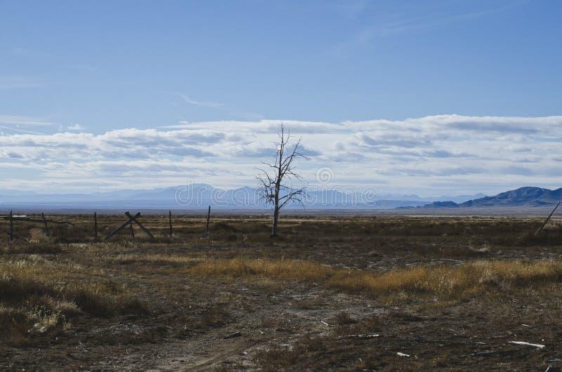 Det ensamma döda trädet i den stora handfatet arkivfoto