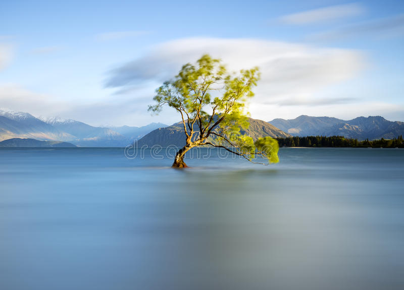 Det ensamma träd royaltyfria foton