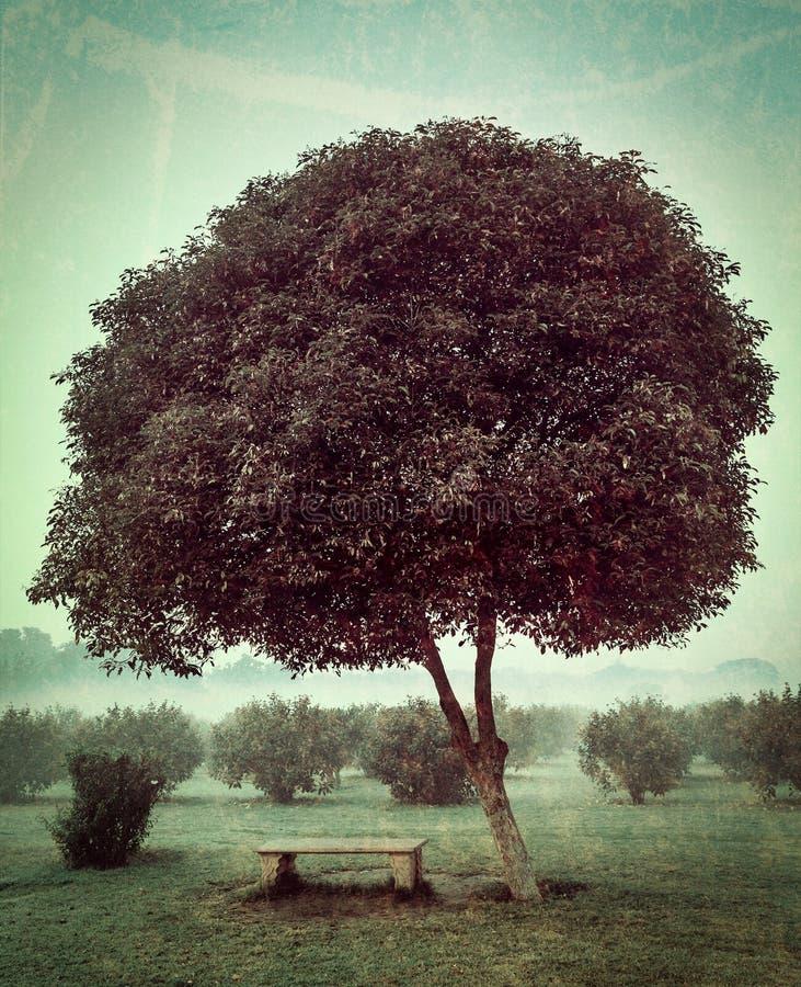 Det ensamma trädet och tömmer bänken arkivbilder