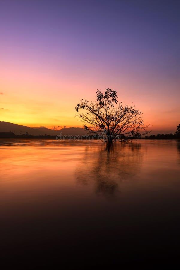 Det ensamma vid liv trädet är i floden av sjön på soluppgång arkivbilder