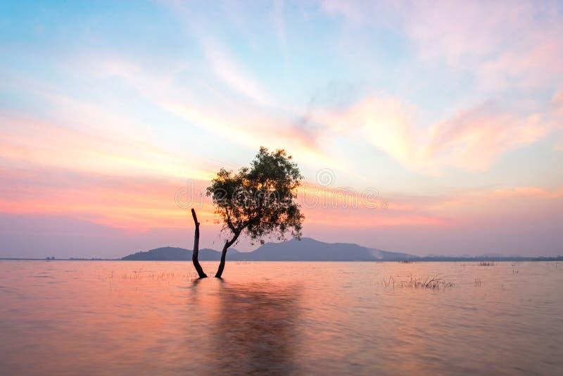 Det ensamma vid liv trädet är i flodvattnet av sjön på solnedgånglandskap i behållare, royaltyfri bild