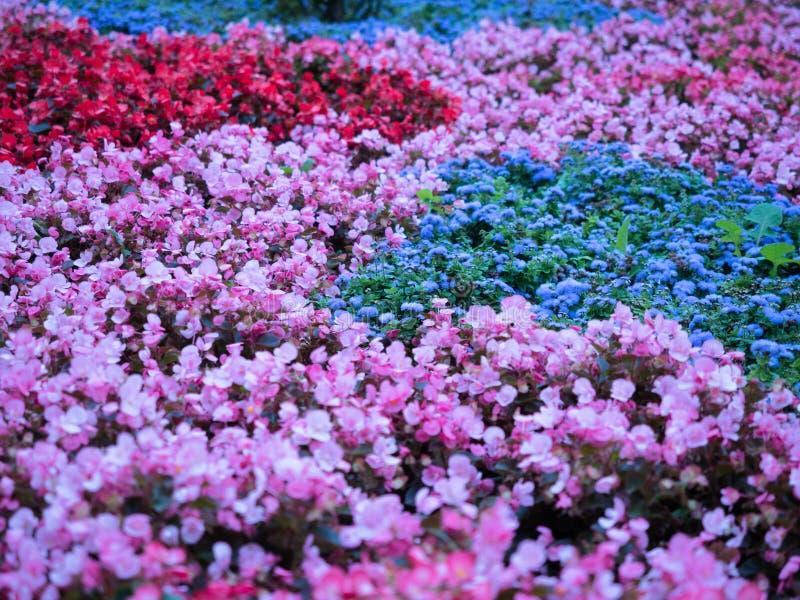 Det färgglade fältet av blommor stänger sig upp, blom- bakgrund royaltyfri foto