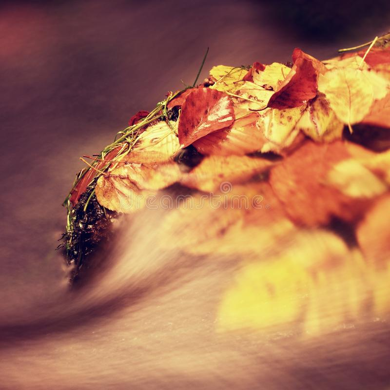 Det färgrika bladet som fångas i bergfloden, höst färgar i ström arkivbilder