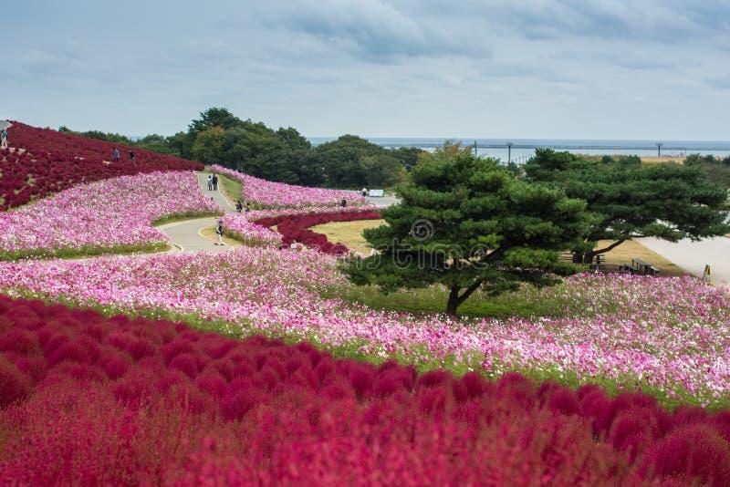Det färgrika blommafältet i trädgården på sjösidan parkerar arkivfoton