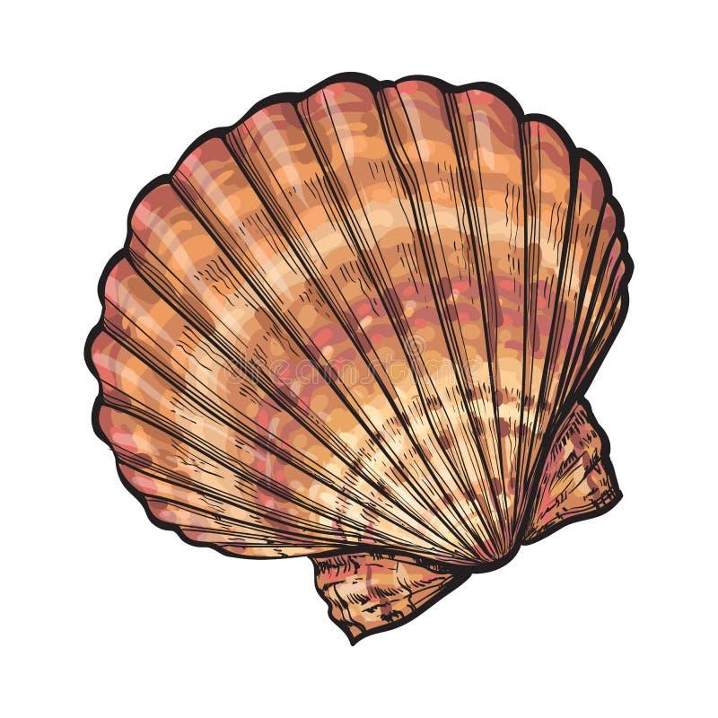 Det färgrika saltvattens- kammusslahavsskalet, skissar stilvektorillustrationen stock illustrationer