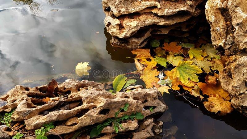 Det färgrika trädet lämnar stupat in i vatten mellan texturerat ridit ut vaggar arkivfoton