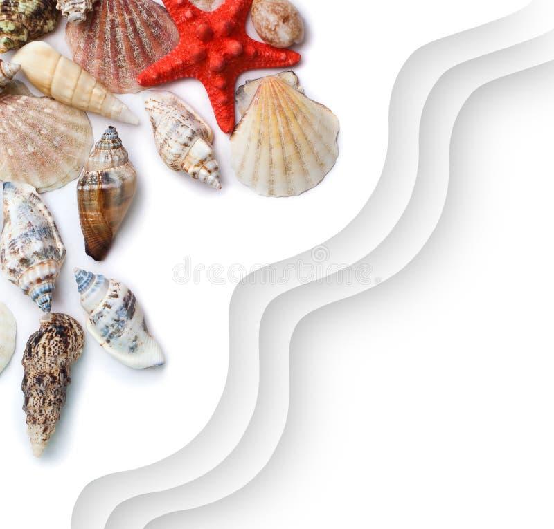 det fästande ihop isolerade banahavet shells white arkivbilder