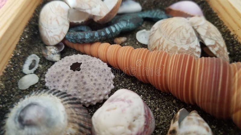 det f?stande ihop isolerade banahavet shells white arkivfoto