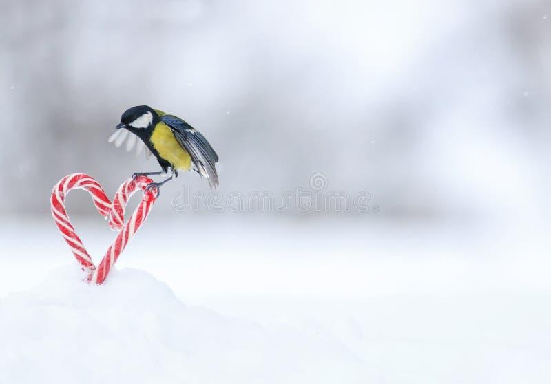 Det festliga hälsa kortet med den gulliga fågelmesen flyger till en ram av röda älskling-formade klubbor i vit snö på valentins d royaltyfria bilder