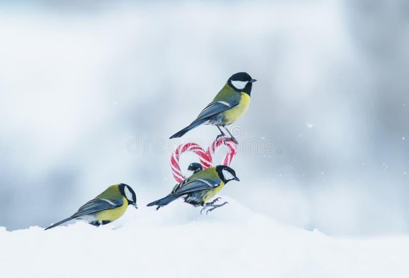 Det festliga hälsa kortet med flera gulliga sångarefåglar flög till de söta klubborna i sidan av hjärtan i vit snö på royaltyfri foto