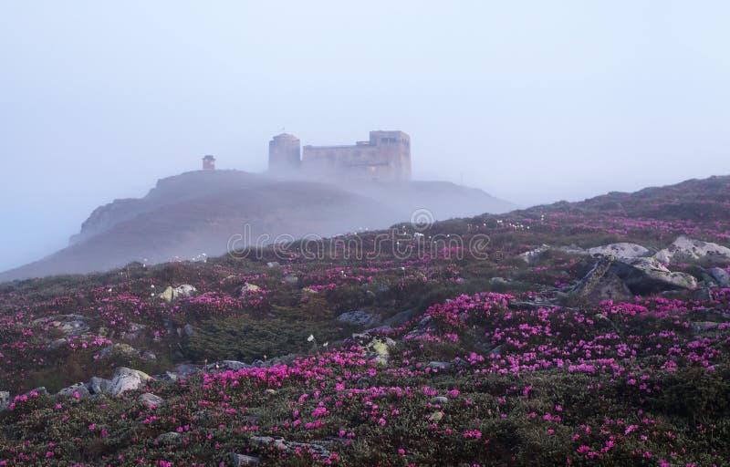 Det finns en övergiven observatorium på det höga berget Pip Ivan, rosa rhododendroner växer på gräsmattan med vaggar royaltyfri fotografi