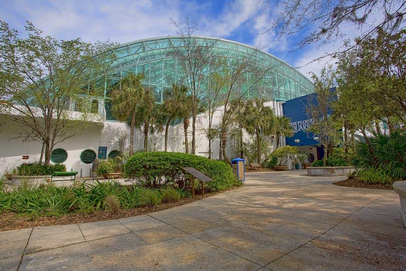 Det Florida akvariet royaltyfri foto