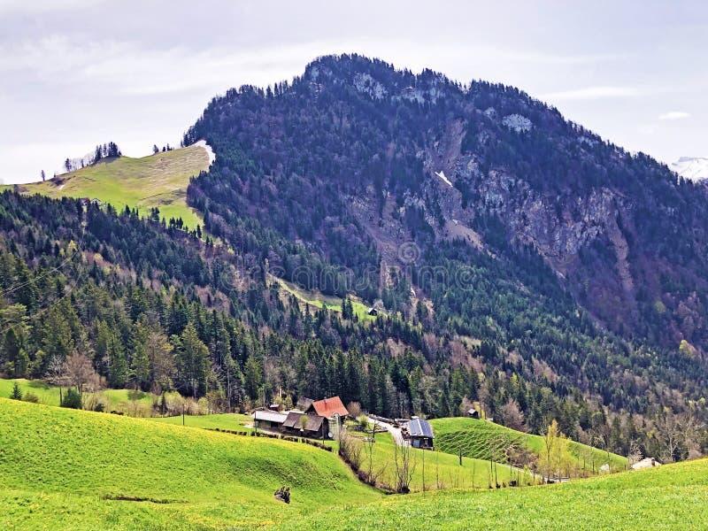 Det forested alpina maximumet av det Gersauerstock eller Vitznauerstock maximumet på det Rigi berget royaltyfri bild