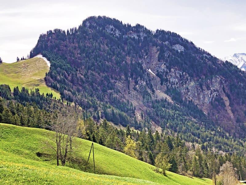 Det forested alpina maximumet av det Gersauerstock eller Vitznauerstock maximumet p? det Rigi berget arkivbilder