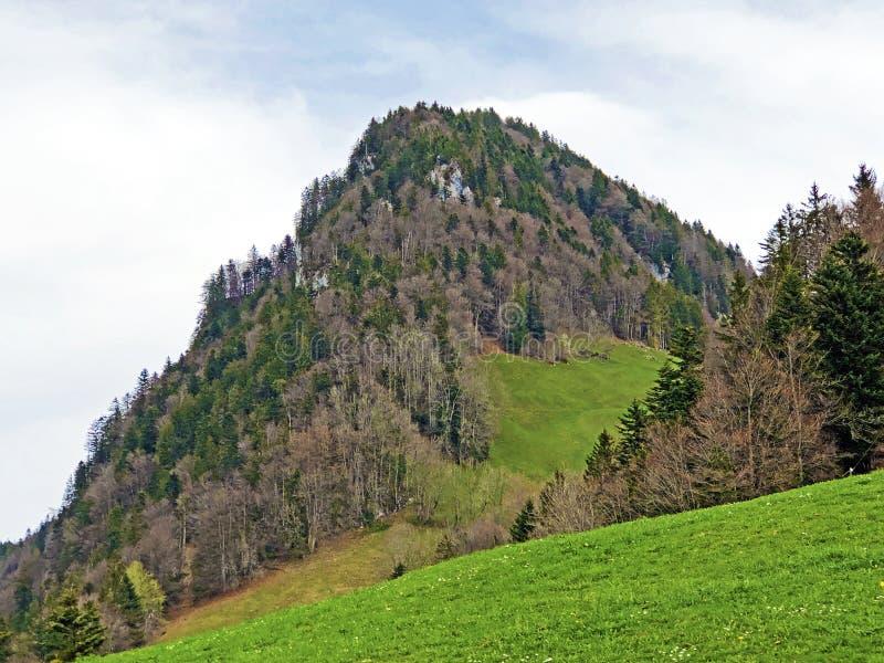 Det forested alpina maximumet av det Gersauerstock eller Vitznauerstock maximumet p? det Rigi berget royaltyfri foto
