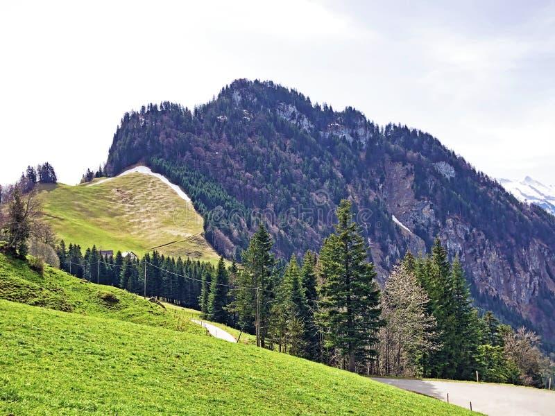 Det forested alpina maximumet av det Gersauerstock eller Vitznauerstock maximumet p? det Rigi berget royaltyfria foton