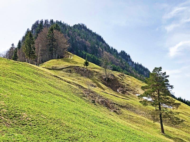Det forested alpina maximumet av det Gersauerstock eller Vitznauerstock maximumet p? det Rigi berget arkivbild