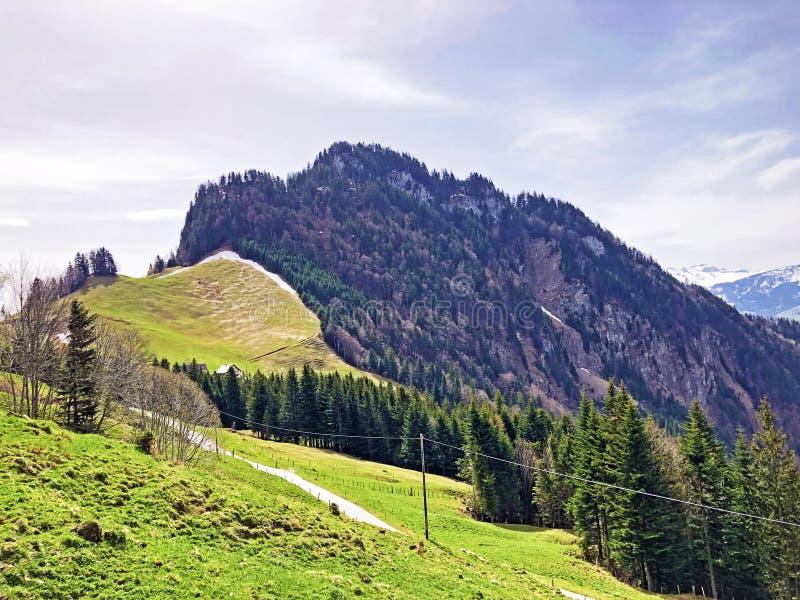 Det forested alpina maximumet av det Gersauerstock eller Vitznauerstock maximumet p? det Rigi berget royaltyfria bilder