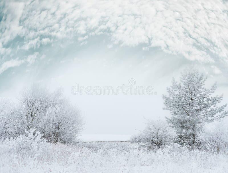 Det frostiga landskapet för vinterdagen med snö täckte träd och härlig himmel royaltyfri bild