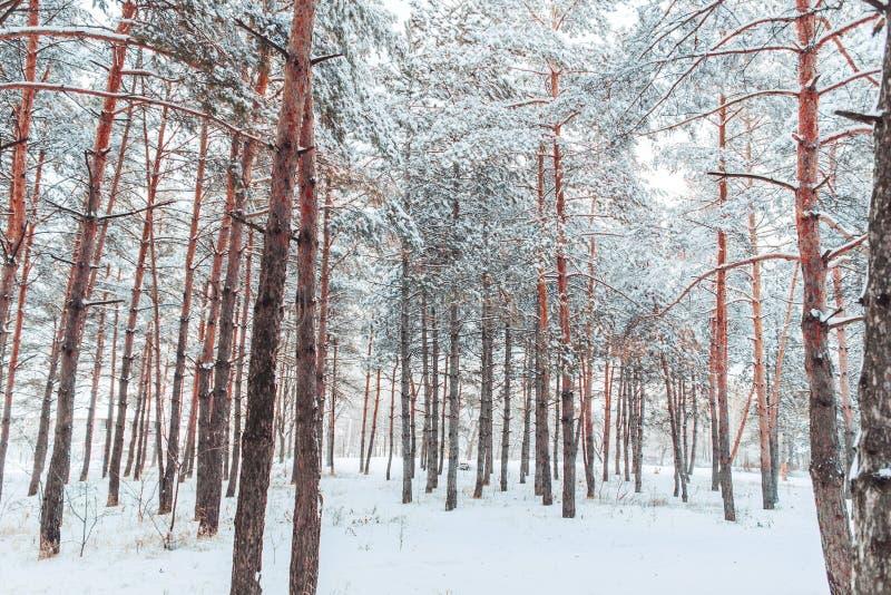 Det frostiga vinterlandskapet i snöig skog sörjer filialer som täckas med insnöat kallt vinterväder arkivbild