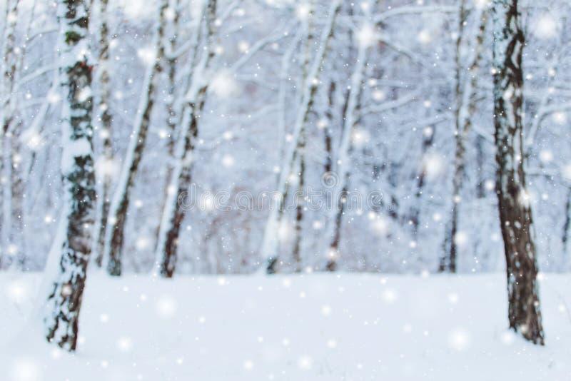 Det frostiga vinterlandskapet i snöig skog sörjer filialer som täckas med insnöat kallt vinterväder royaltyfria foton