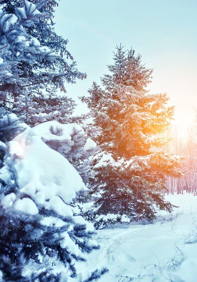 Det frostiga vinterlandskapet i snöig skog sörjer filialer som täckas med insnöat kallt vinterväder royaltyfri bild