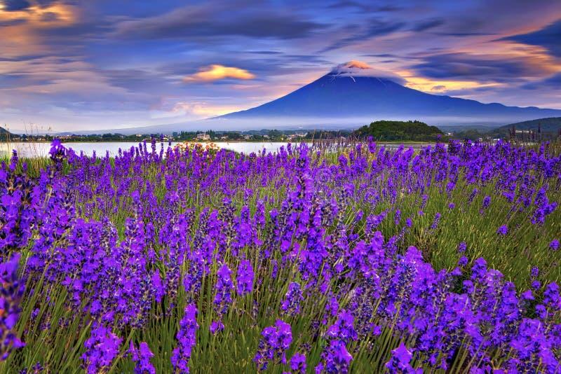 Det Fuji berg- och lavendelfältet i sommar på Oishi parkerar, Japan royaltyfri foto