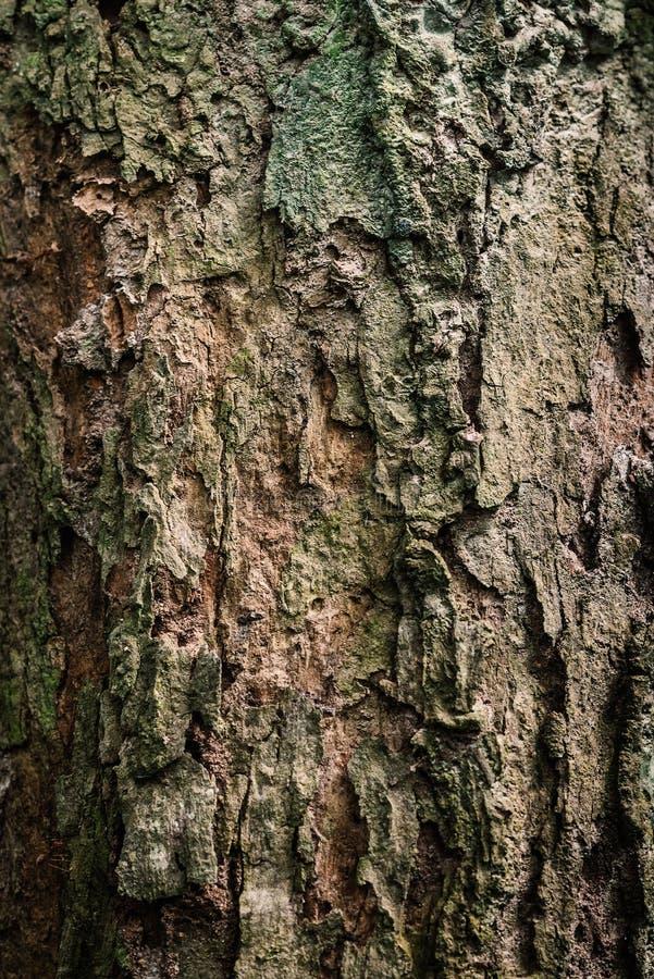 Det gamla skället av trädtexturbakgrund royaltyfri fotografi