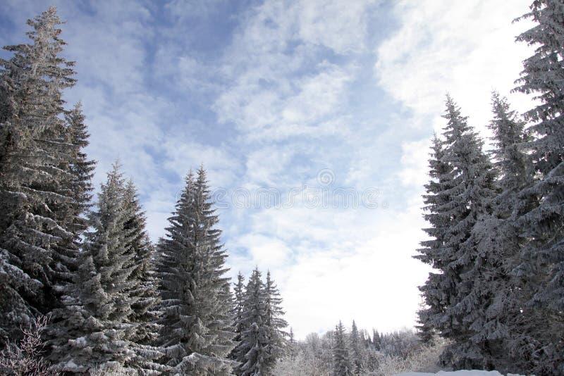 Det gamla vinterlandskapet av århundradet sörjer dolt med snö på överkanten av berget Vinterlandskap för blå himmel Pines täckte  royaltyfri foto