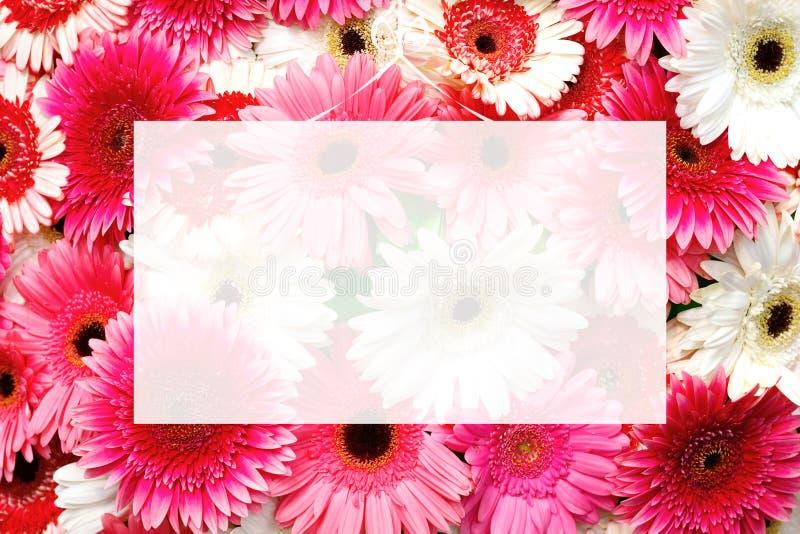Det genomskinliga tomma hälsningkortet på val av den olika färgrika gerberaen blommar bakgrund royaltyfria bilder