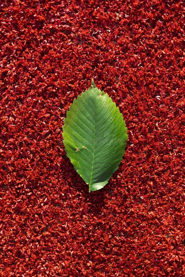 Det gröna bladet ligger på en röd bakgrund Färgerna och lynnet av hösten ovanf?r sikt arkivfoton