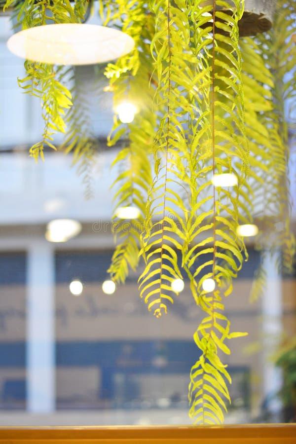 Det gröna bladet med ljus reflekterade från kaféfönstret royaltyfria foton