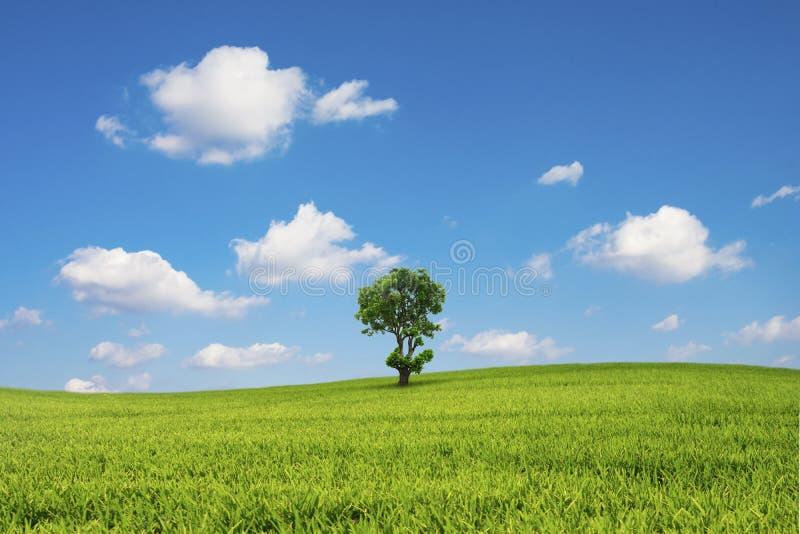 Det gröna fältet och trädet med blå himmel fördunklar arkivfoto