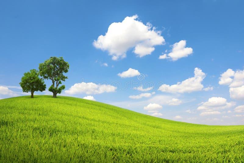 Det gröna fältet och trädet med blå himmel fördunklar royaltyfri bild