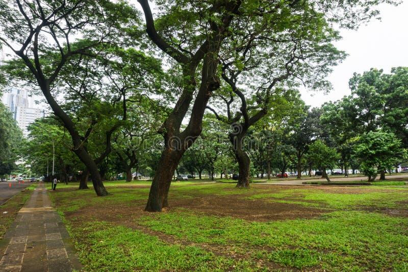 Det gröna landskapet på staden parkerar med stora träd, gräs och sikten av byggnadsfotoet som tas i Jakarta Indonesien fotografering för bildbyråer