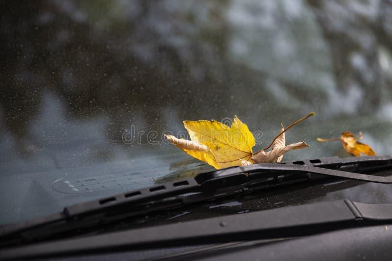 Det gula höstbladet ligger på den dammiga vindrutan av bilen under arkivfoto