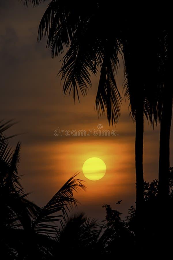 Det guld- ljuset av solen och molnen i himlen med skuggan av kokospalmerna arkivbild