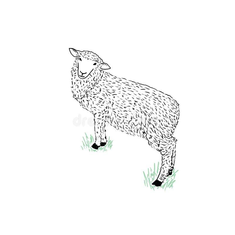 Det gulliga anseendet för svarta får på gräset, skissar för din design royaltyfri illustrationer