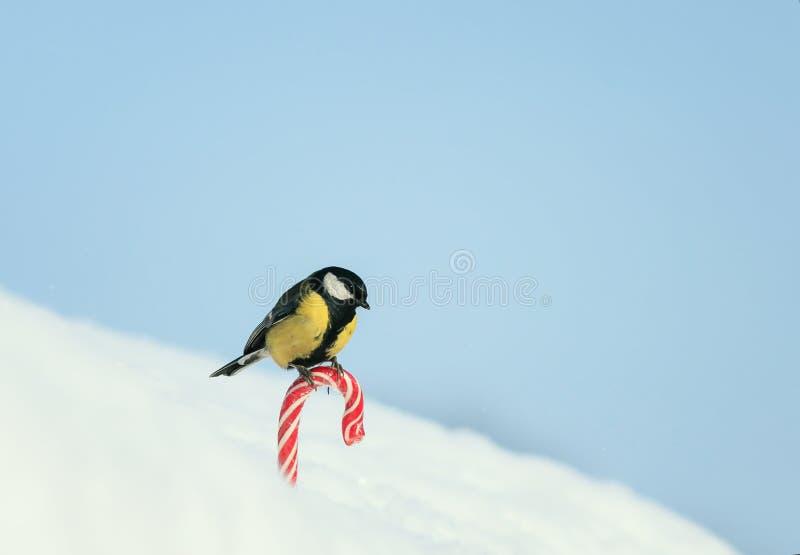 Det gulliga feriekortet med fågeln vid fågeln är på den söta röda söta vita snön på gatan på bakgrunden av blå himmel royaltyfri fotografi