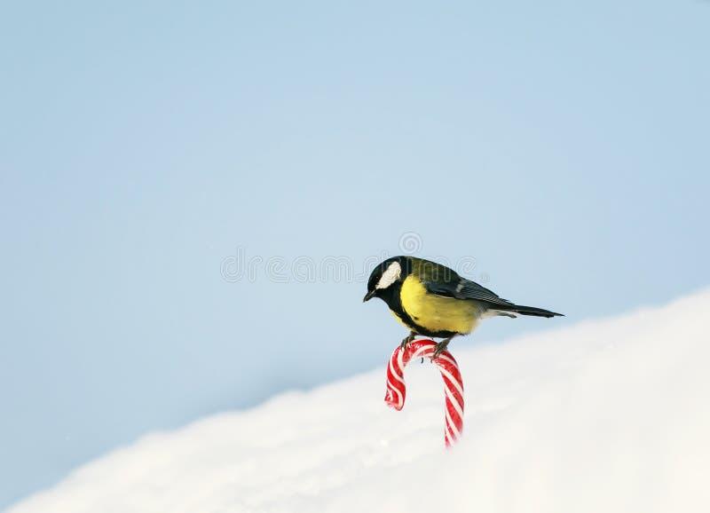 Det gulliga feriekortet med fågeln vid fågeln är på den söta röda söta vita snön på gatan på bakgrunden av blå himmel royaltyfri bild