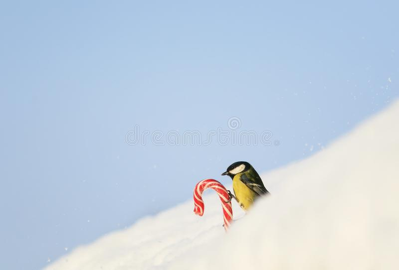Det gulliga feriekortet med fågeln vid fågeln håller den söta röda söta vita snön på gatan på bakgrunden av blå himmel royaltyfria bilder