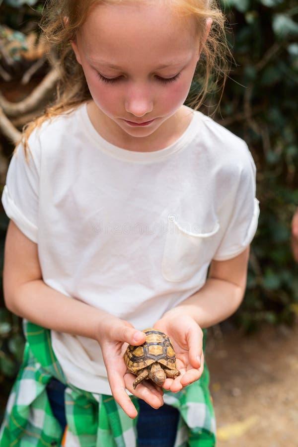Det gulliga flickainnehavet behandla som ett barn sköldpaddan royaltyfri bild
