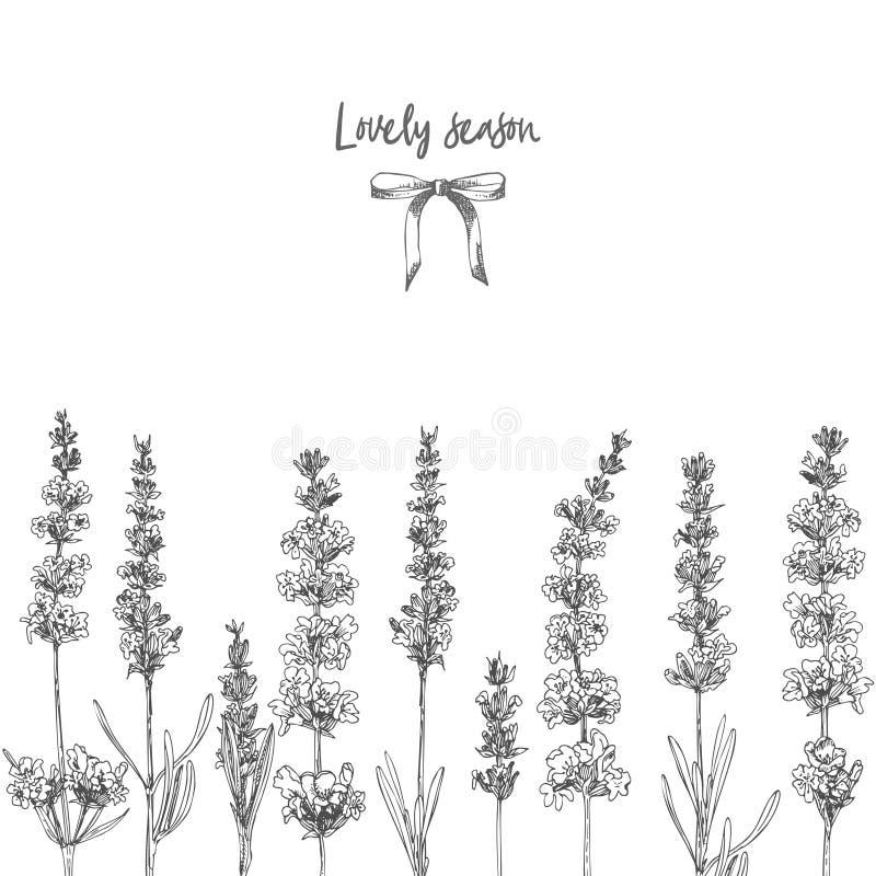Det gulliga kortet med av den drog handen skissar av lavendelblomman och gulliga pilbågar som isoleras på vit bakgrund Frankrike  royaltyfri illustrationer